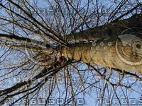 wood0296.jpg