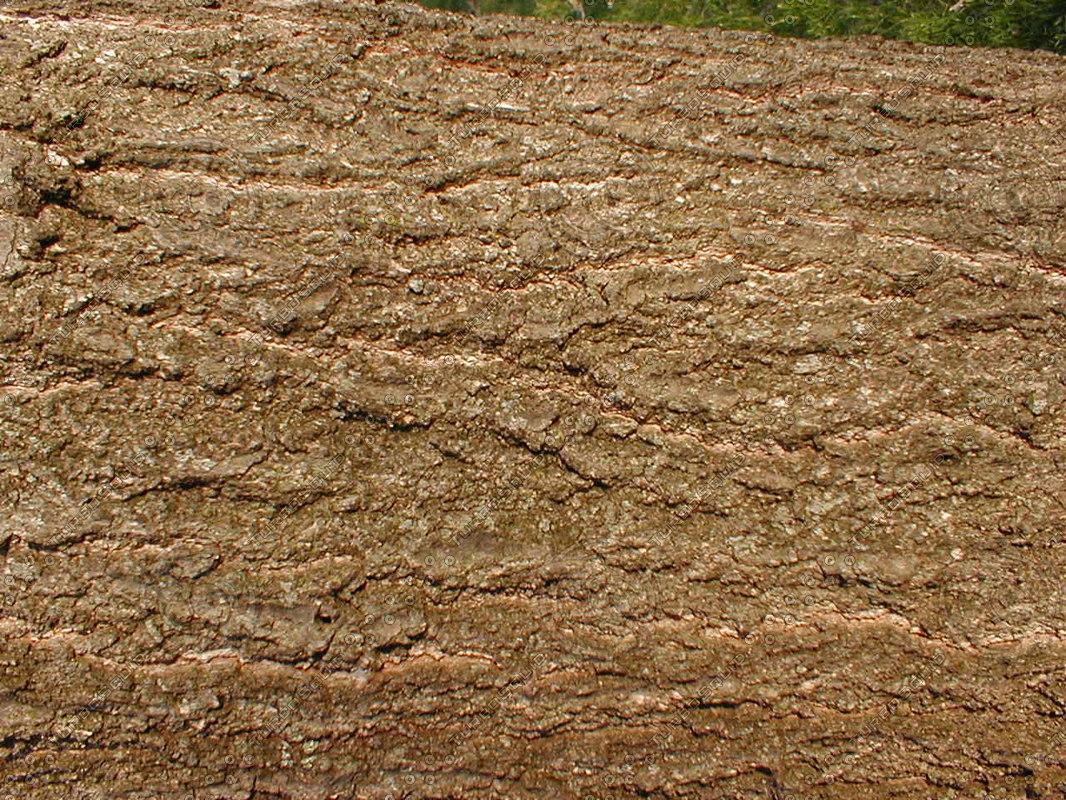 wood0319.jpg