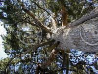 wood0629.jpg