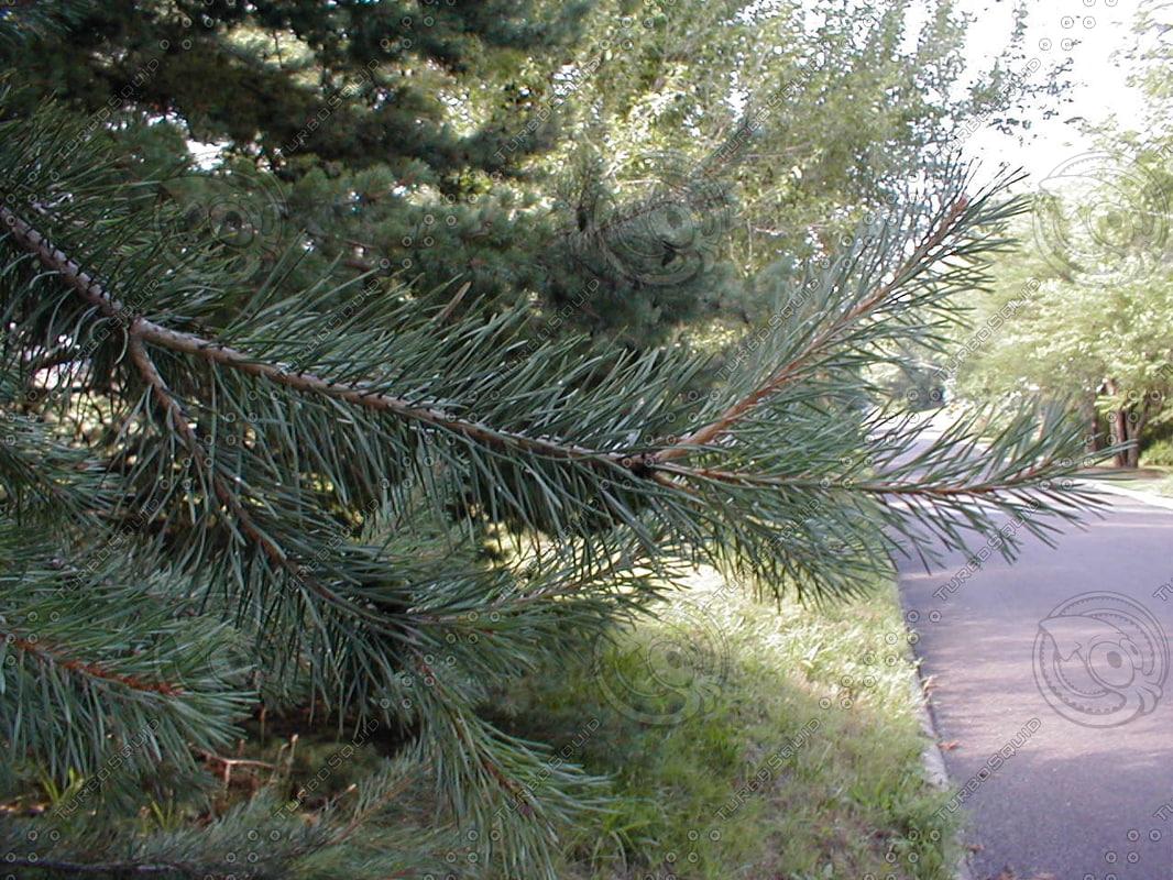 wood0753.jpg