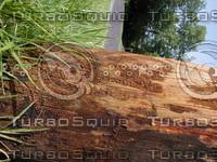 wood0765.jpg