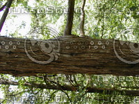 wood0871.jpg
