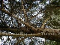 wood0916.jpg