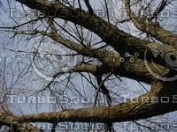 wood0973.jpg