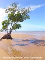 Australia landscape 011.jpg