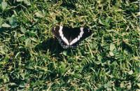 Butterfly 01.jpg