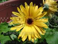 fchamp_flower169.JPG