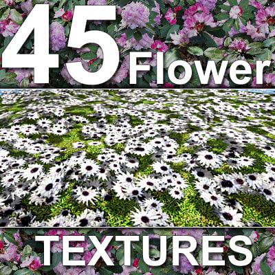 FlowerMaster.jpg