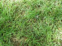 Grass.BMP
