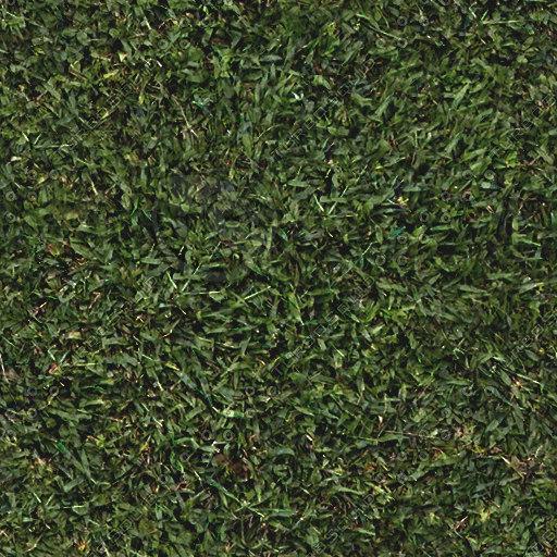 Grass1a.jpg