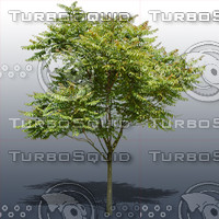 JTX_TREE001.psd.zip