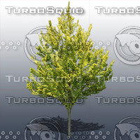 JTX_TREE009.psd.zip