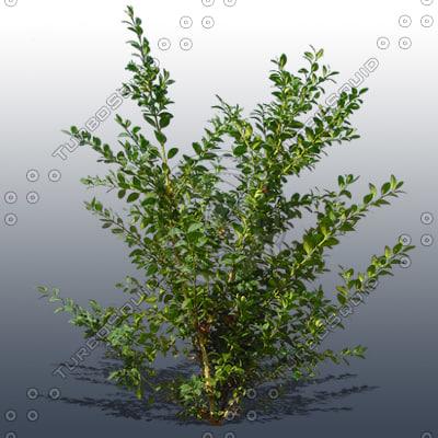 JTX_TREE022_thumbnail1.jpg