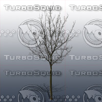 JTX_TREE025.psd.zip