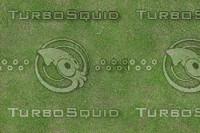 JTX_grass05.jpg