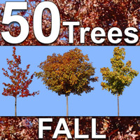 50-Fall-Tree-Textures.zip
