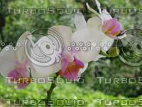 Mini orchid 2.JPG