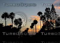 PV Sunset Palms 1857 tm.jpg