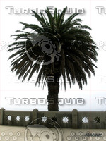 Palm Tree 02 tm.jpg