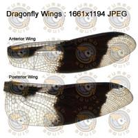 SPT_DragonFlyWings002