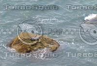 Sea Lion 01.JPG
