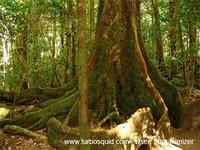 Australia forest 001.jpg