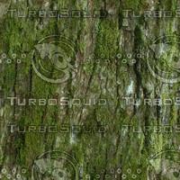 TILE_mossytree.jpg