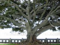 Tree 01.JPG