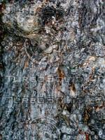 Tree bark 0087.JPG