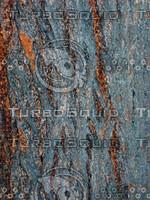 Tree bark 0092.JPG