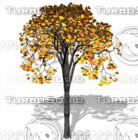 Tree1.psd