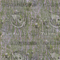 TreeBark-c-HiRes-300ppi.bmp