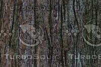 bark 1waxed.jpg