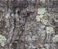 bark 3.jpg