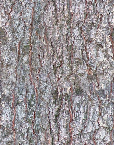 bark1.jpg