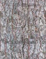 bark7.jpg