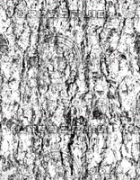 bark7_bump.jpg
