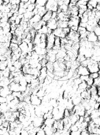 bark6_bump.jpg