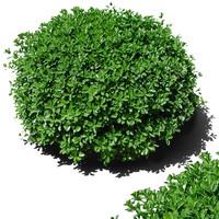 bush4