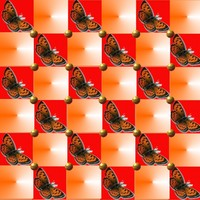butterflies from the sun3.jpg