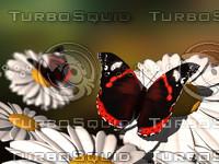 butterfly.BMP