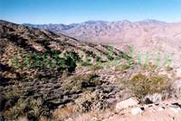desert vista.jpg