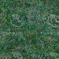grass3_1024x.bmp
