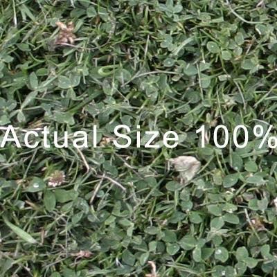 grass_01_thumb_b.jpg