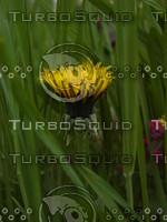 grass_05.JPG
