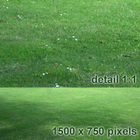 lawn20.jpg
