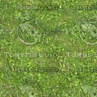 leafygrass1_1024x.bmp