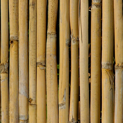 Single Bamboo Texture 3ds Max Bamboo wood 3docean item ...