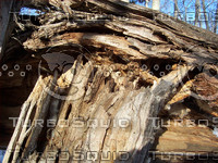 rotted_tree_trunk.jpg