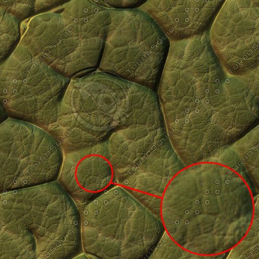 toad-skin-01-tn.jpg